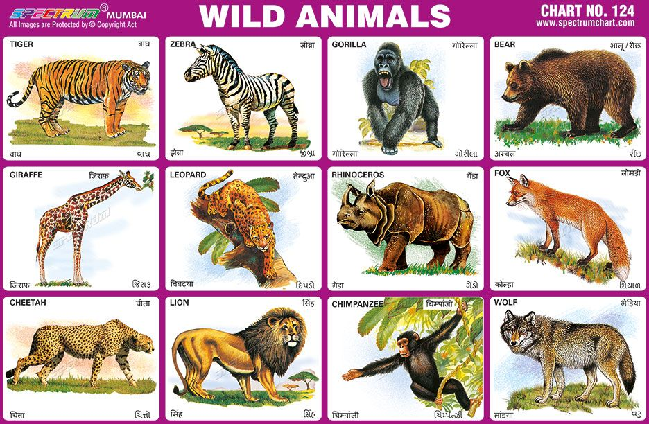 Thorough Wild Animals Chart With Names Pdf Animal Charts