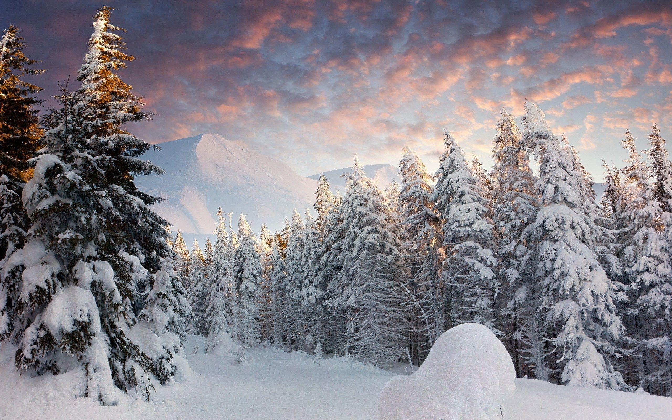 Winter Forest Night Wallpaper