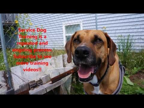 Service Dog Training 4 Close The Door Youtube Service Dog