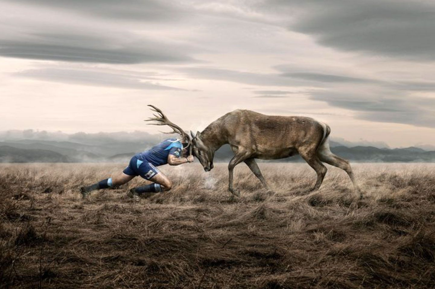 Hunting Rugby Style Animals Rugby Wallpaper Animal Action