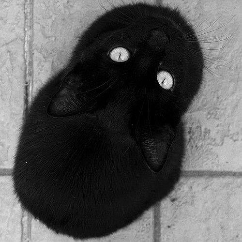 (〃^ー^〃) 猫 ねこ #cat #blackCat