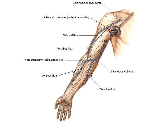 Aula de Anatomia   Sistema Linfático