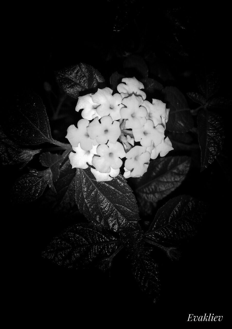 May 12 2018 she sees in black and white thinks in greys but