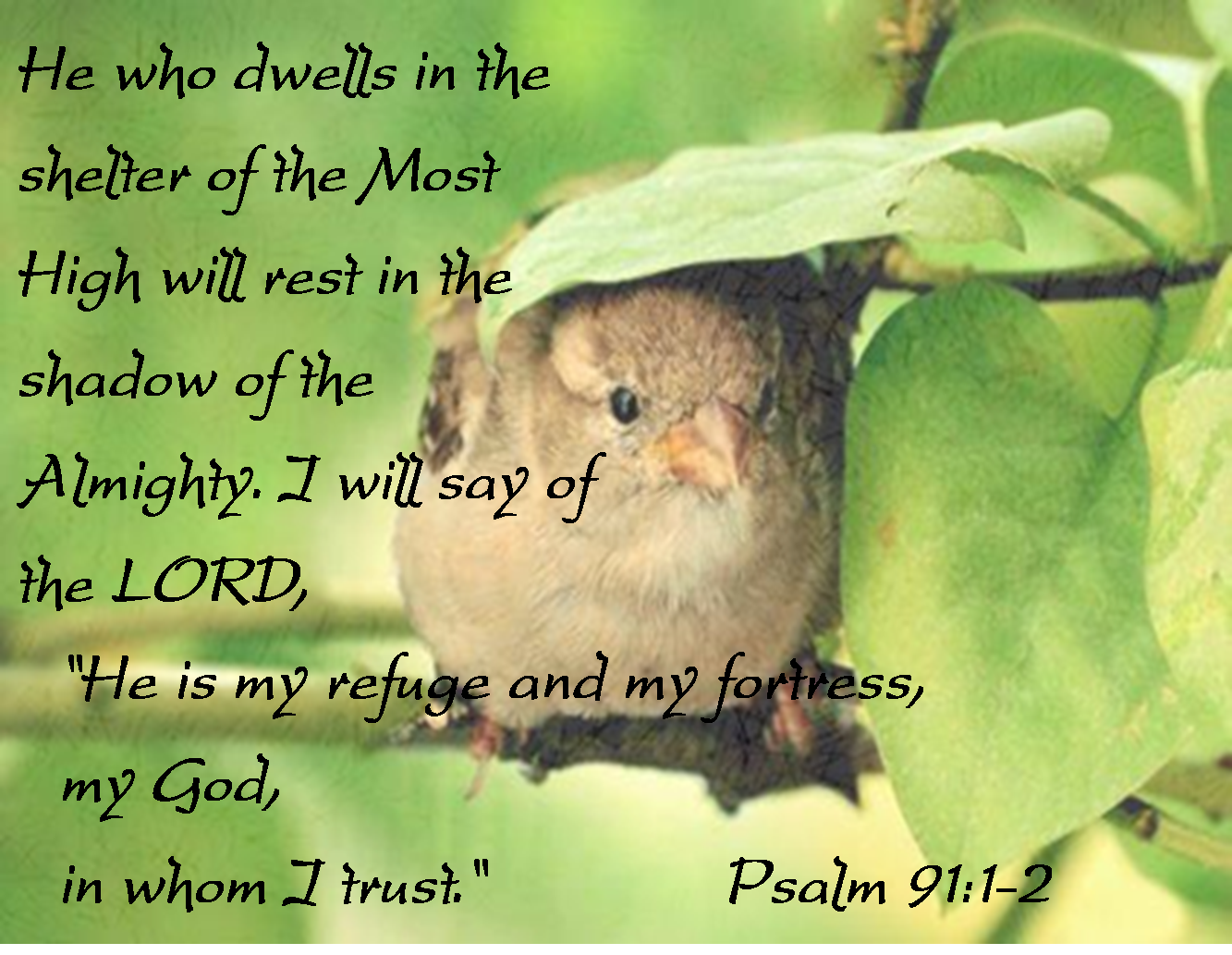 Image result for Psalm 91:1-2
