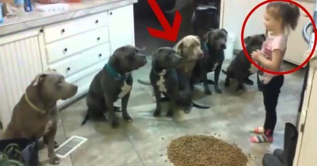 Esto pasa cuando dejas a una niña de 4 años sola con 6 pitbulls.  Ver  http://bit.ly/1DI5iHa