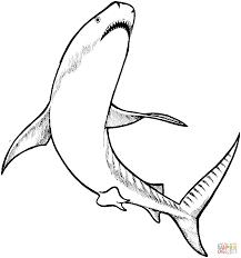 Resultado De Imagen Para Disegno Di Squalo Fantasie Shark