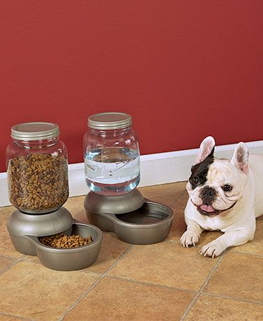 Petmate Food Dispenser Fascinating Enjoy A Weekend Getaway With No Worries About Who Will Feed Your Pet Decorating Inspiration