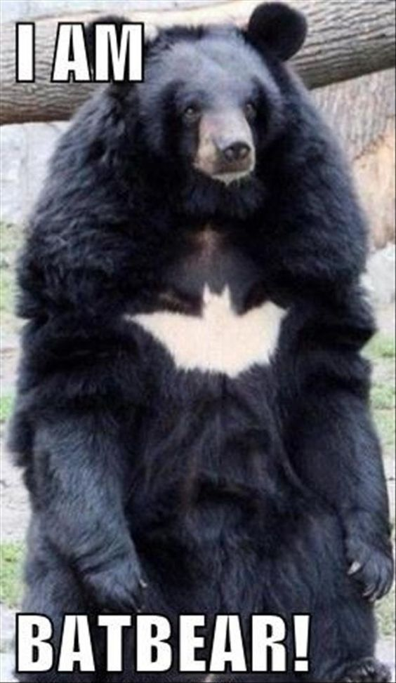 Batbear Batbear BestMemesOfAllTime DirtyFunnyMemes - The 21 best animal selfies of all time