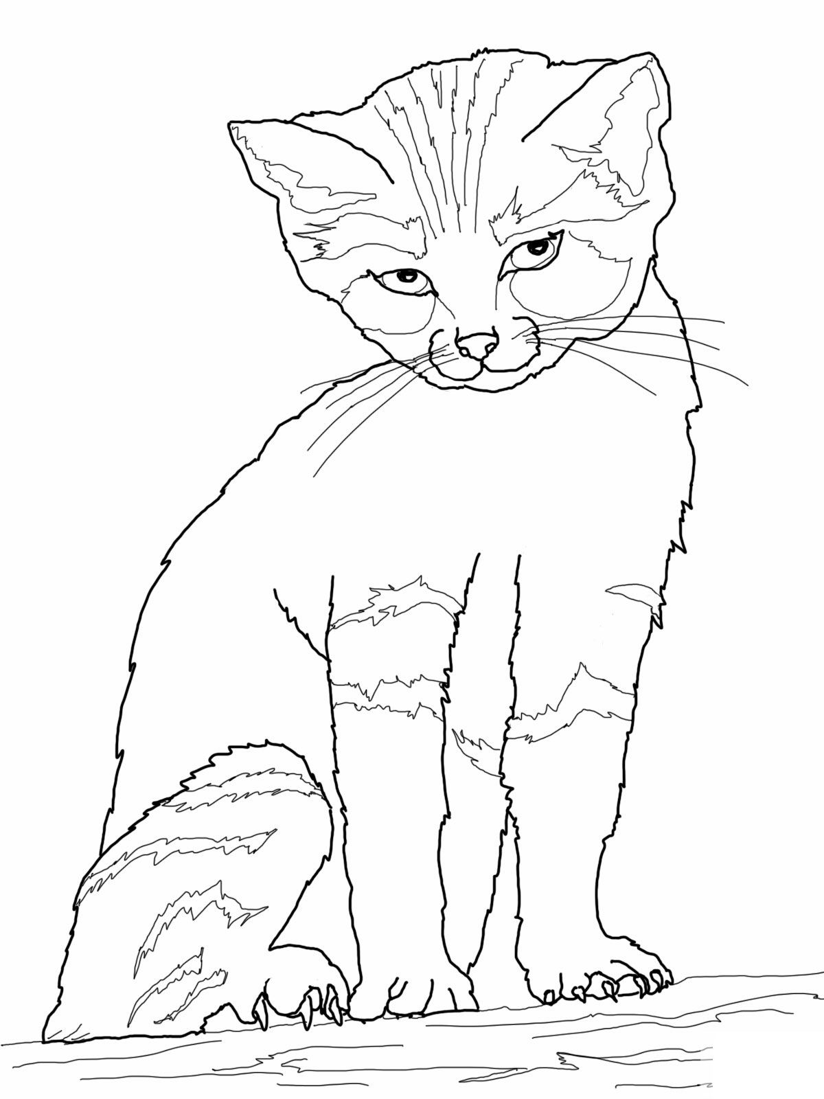 Cat coloring pages cat coloring pages printable