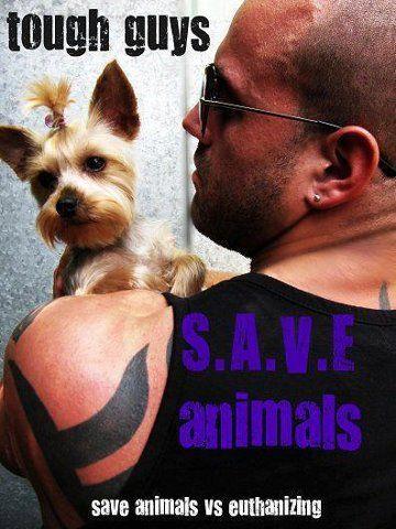 I Speak for Pitbulls: Real Men are Kind to Animals.