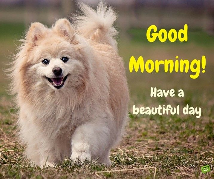 Amazing Good Morning Quotes And Images That Will Inspire You Good Morning Dog Good Morning Cards Funny Good Morning Images