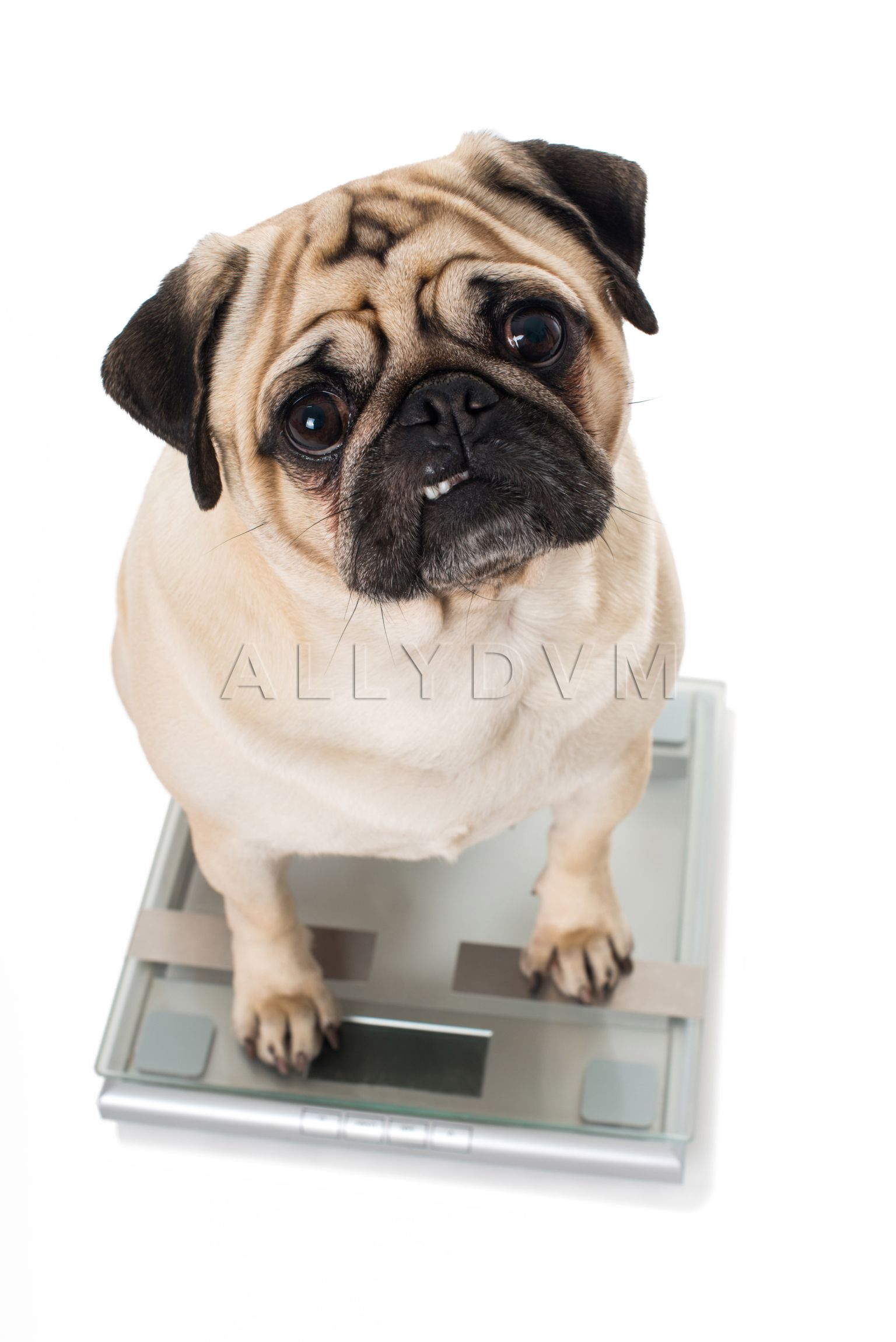 Puppies Dogs Image By Allydvm Medication For Dogs Dogs Dog