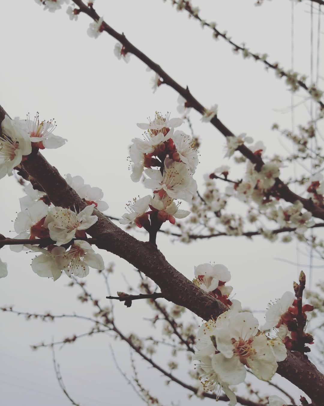 No Winter Lasts Forever No Spring Skips Its Turn Spring Springsummer2019 Springlook Flowers No Winter Lasts Forever No Spri Winter Spring Spring Looks