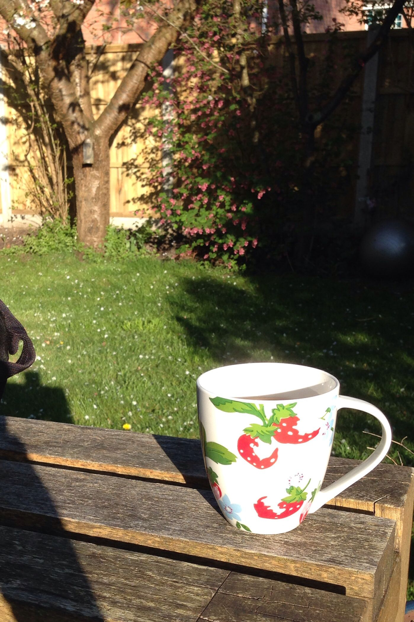 #100happydays - day 4: cup of tea in the garden in the early evening sunshine.
