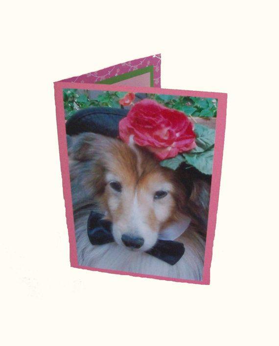 Sheltie Greeting Card Blank Dog Card Dog Photo by Lillyzcardz, $4.00