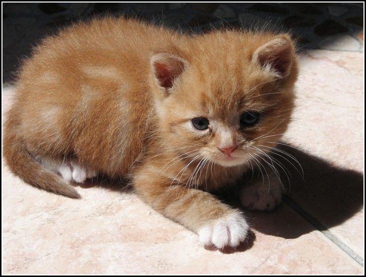 Orange Tabby Kitten Newborn Kitten Pet Photos Gallery J72j4pgb5g Orange Tabby Cats Tabby Kitten Newborn Kittens