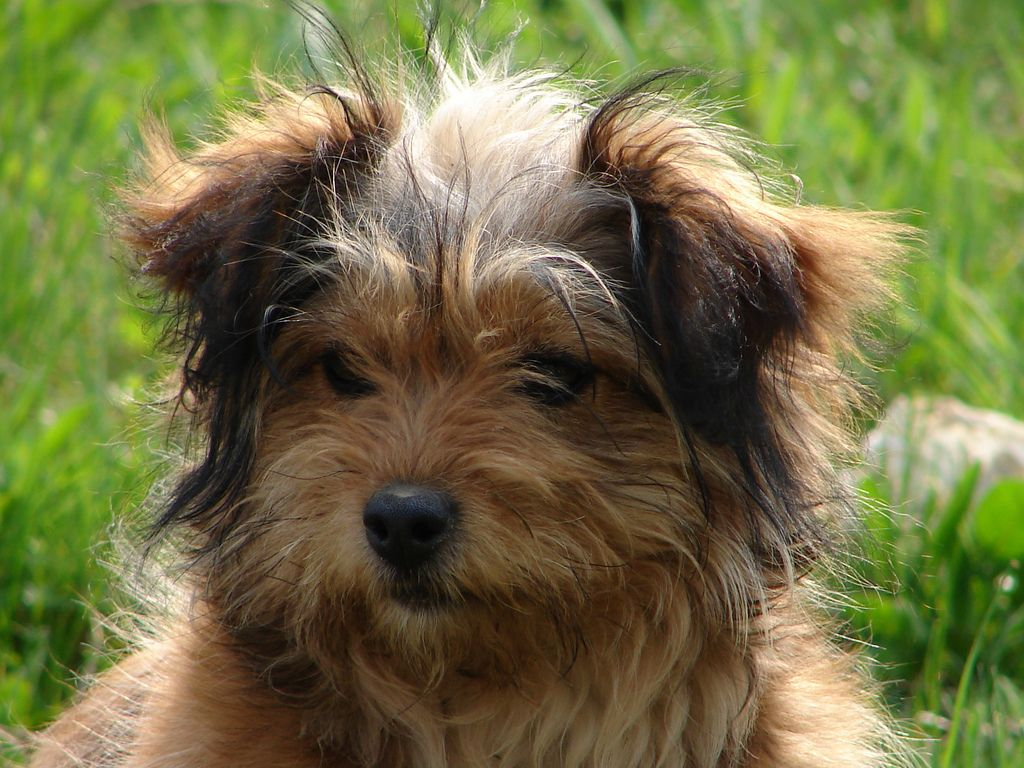 Dog aga dog and animal