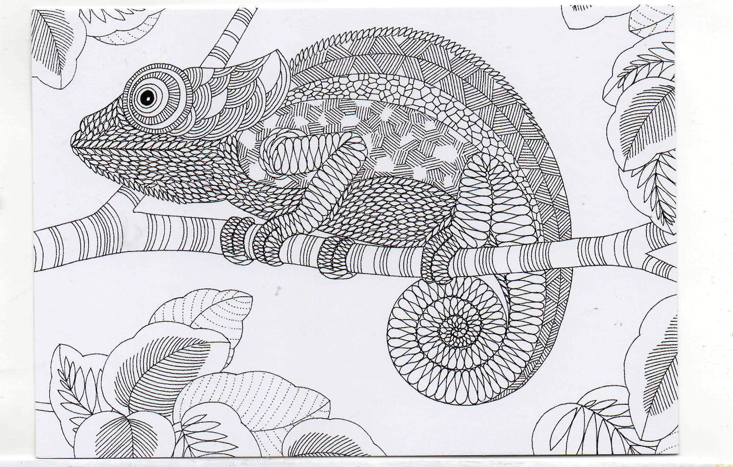 Millie Marotta\'s Colouring in Card - Chameleon | dibujos | Pinterest ...