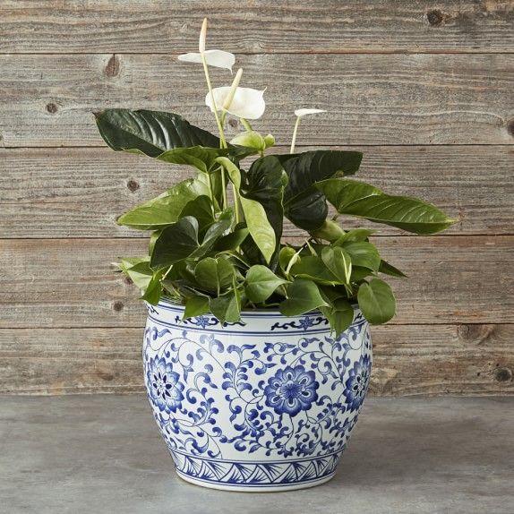Blue White Ceramic Planter Extra Large White Ceramic Planter White Planters Large Flower Pots