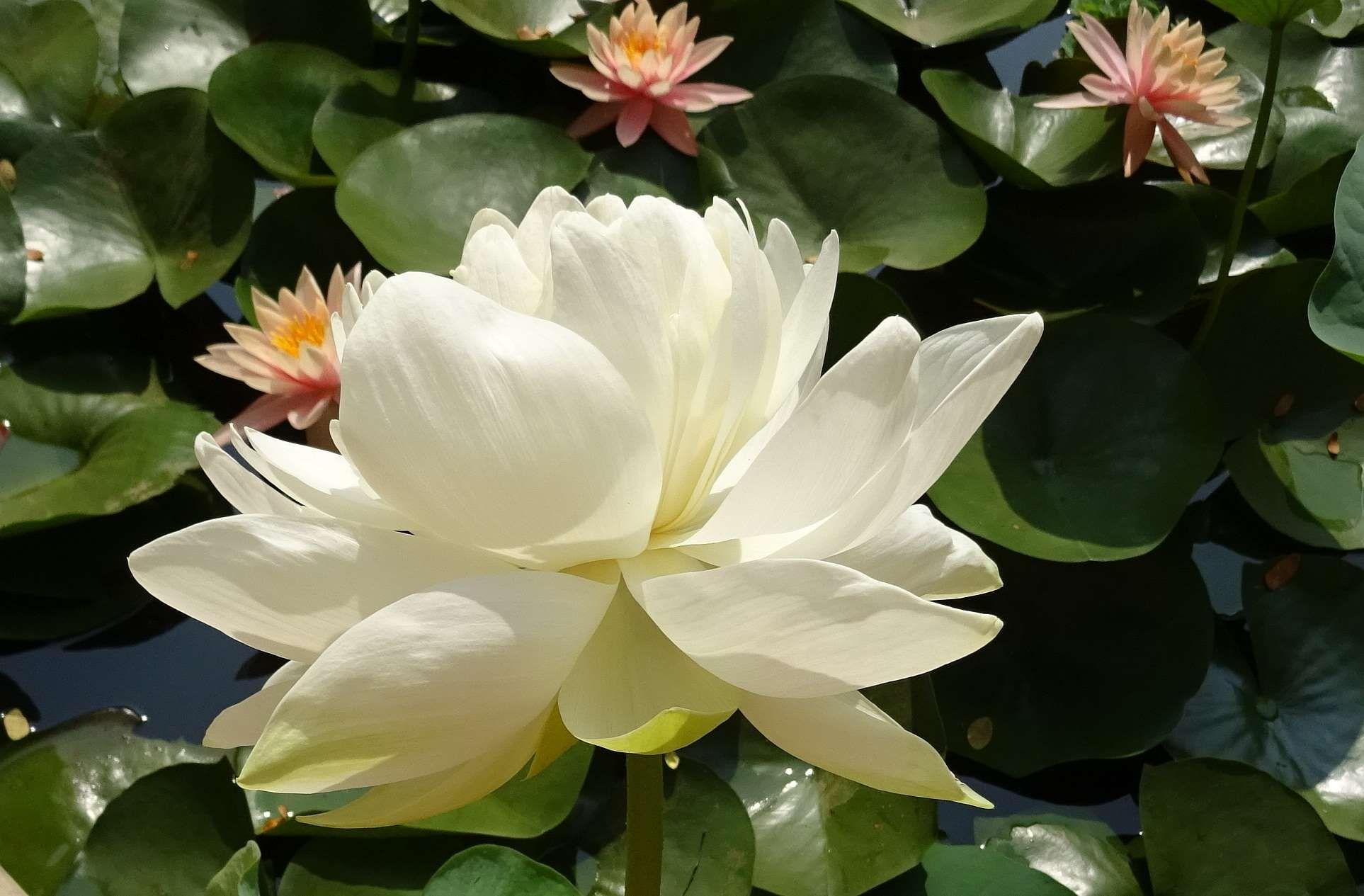Backyard Bloom Blossom Dharwad Flora Flower Garden Gardening