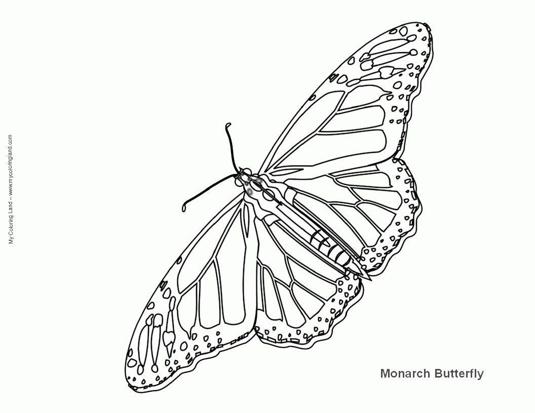 Brilliant Image Of Monarch Butterfly Coloring Page Davemelillo Com Butterfly Coloring Page Monarch Butterfly Coloring Pages [ 816 x 1056 Pixel ]