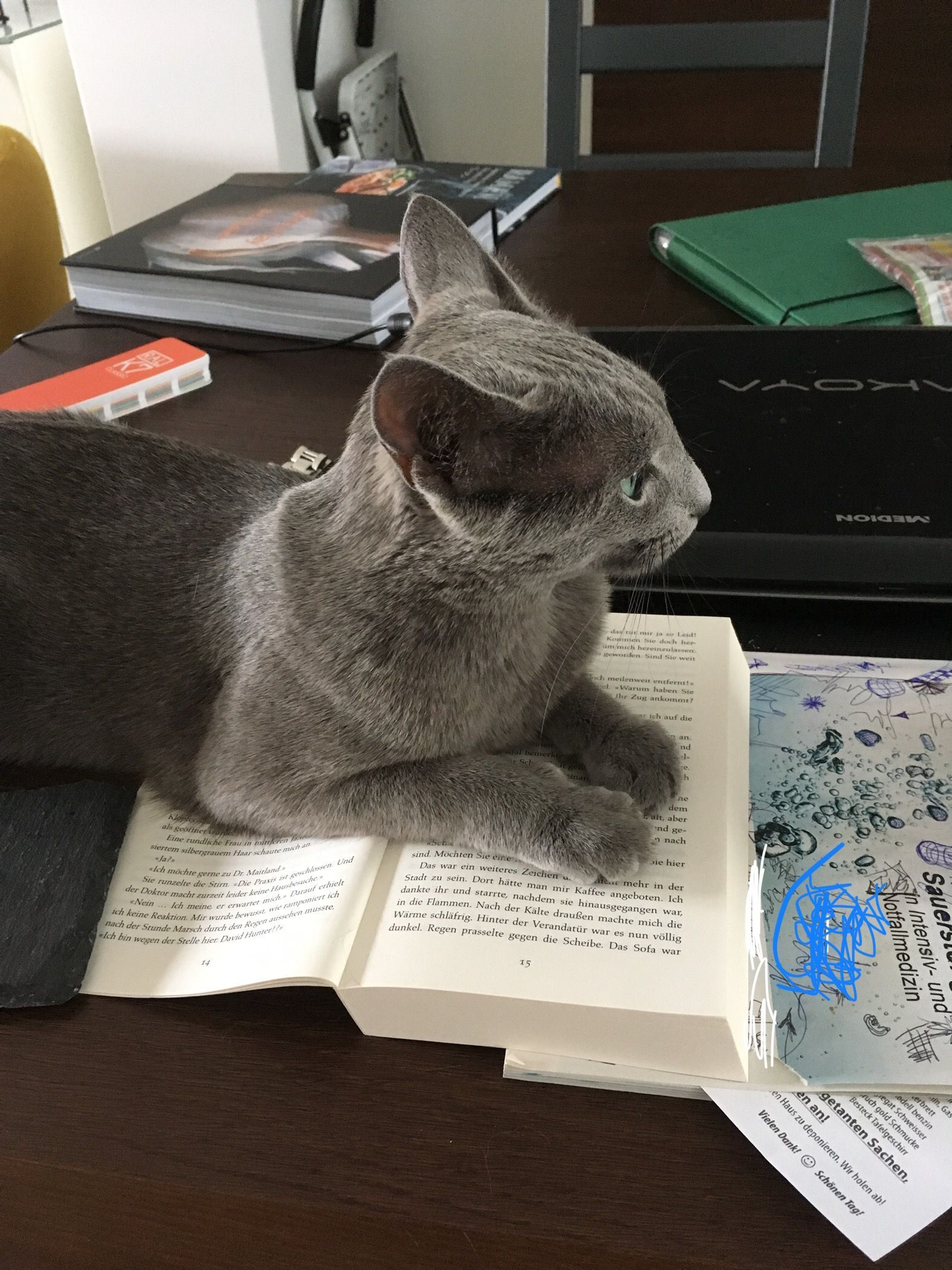 Pin By Geraldine Ashworth On Russian Blue Cats Russian Blue Russian Blue Cat Russian Blue Kitten