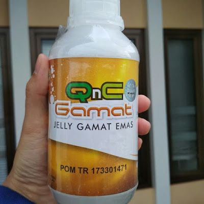 Kandungan Obat Qnc Jelly Gamat