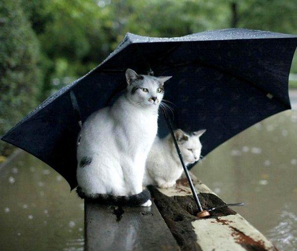 「cat rain」の画像検索結果