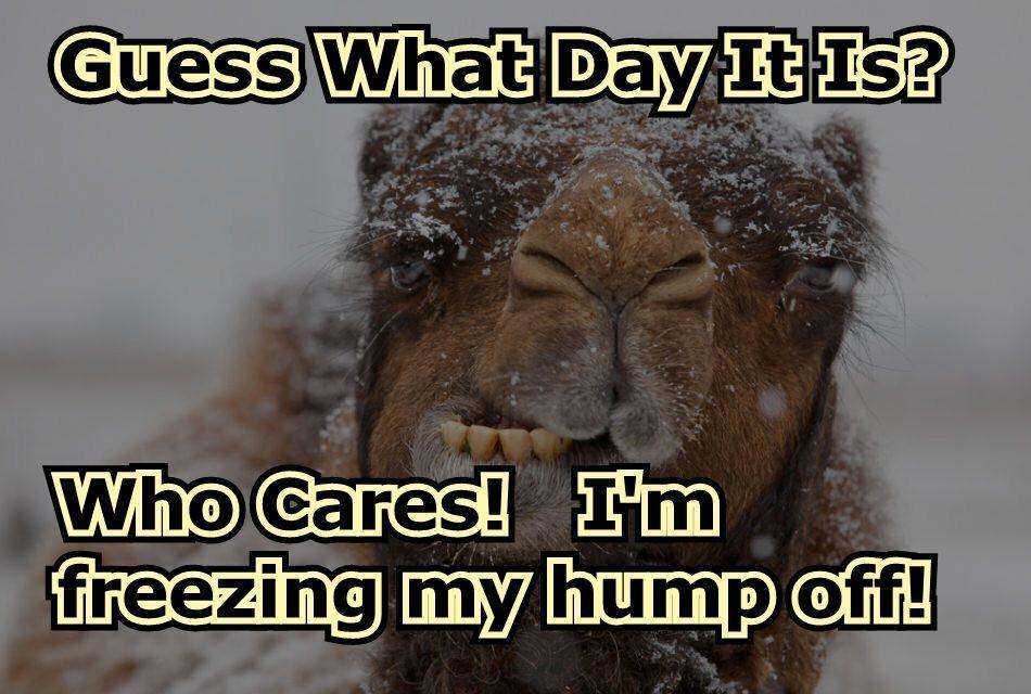 Happy Hump Day Wishes Wednesday Quotes And Funny Images Humor Pagi Kutipan Selamat Pagi Berat Badan