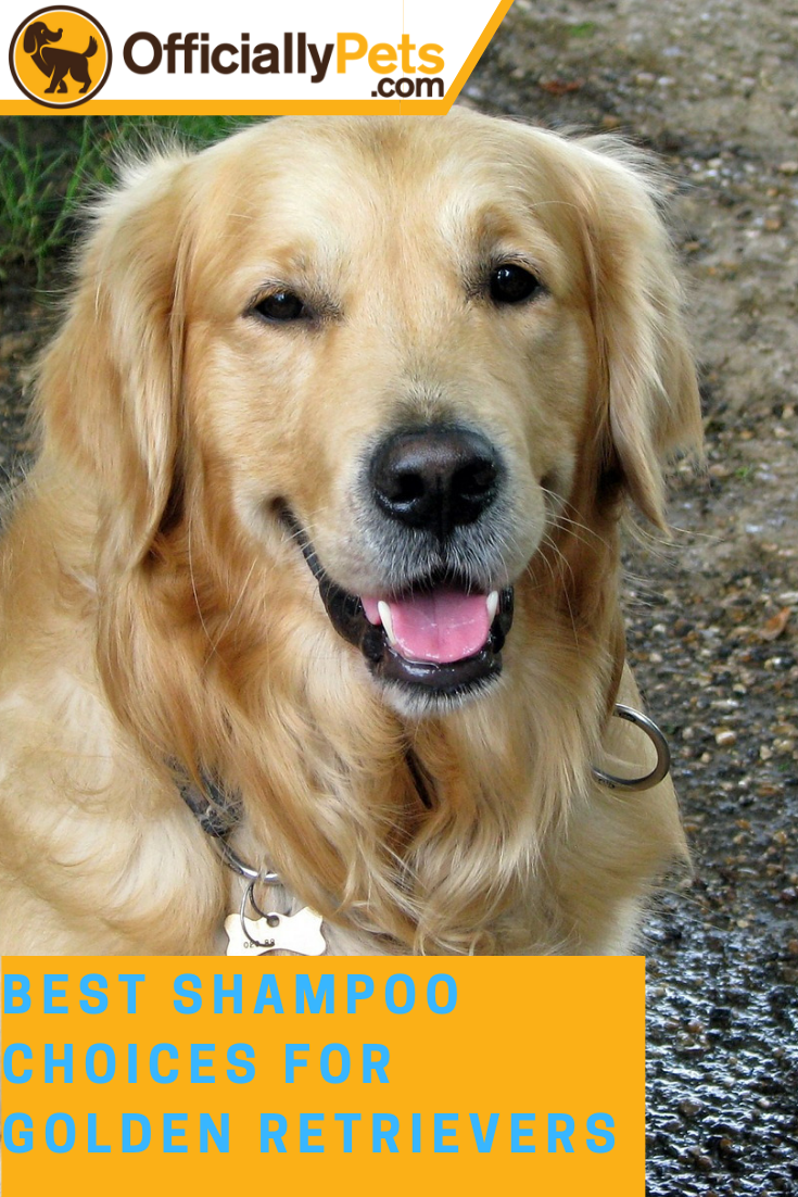 5 Best Shampoo Choices For Golden Retrievers 2019 Keep Them Clean Golden Retriever Best Shampoos Retriever