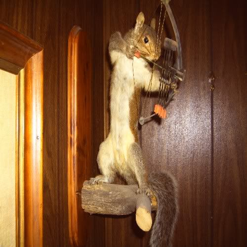 Squirrel Hunting With A Bow Squirrel Hunting Hunting