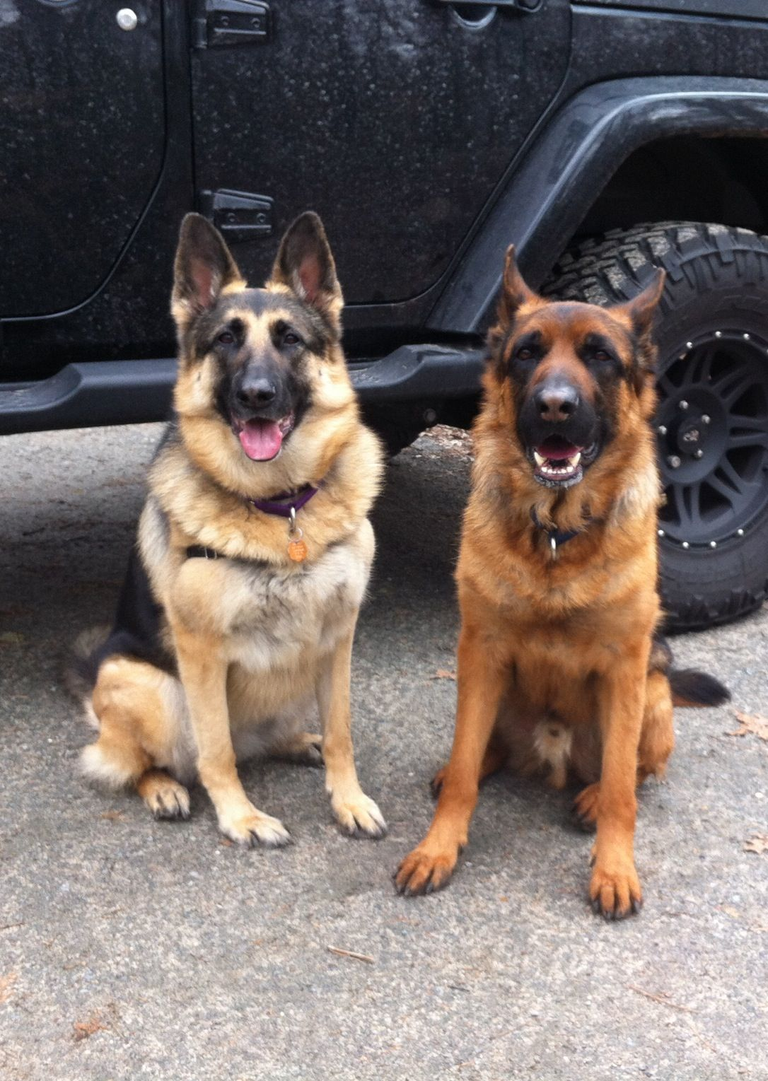 Black And Tan Gsd Kaylee And Black And Red Gsd Ozzie Two Happy German Shepherd Dogs German Shepherd Dogs Shepherd Dog Dogs