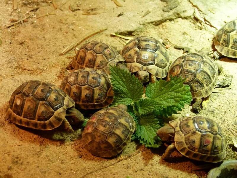 Schildkroete Bayern Schildkröten Turtle Animals Und Bayern