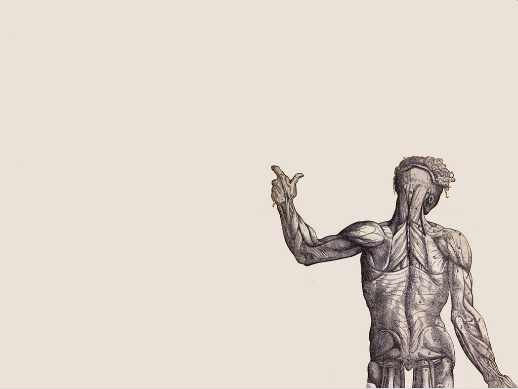 Anatomy Wallpapers Wallpaperup Attack On Titan Art Art Wallpaper
