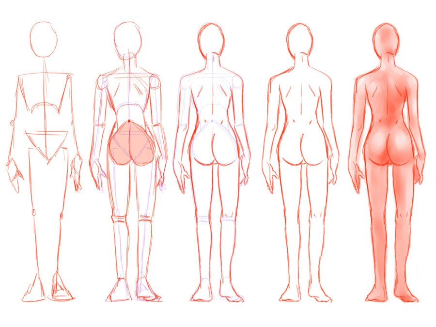 Construction Female Back By Seandee21 On Deviantart Figure Drawing Female Anatomy Drawing Drawings