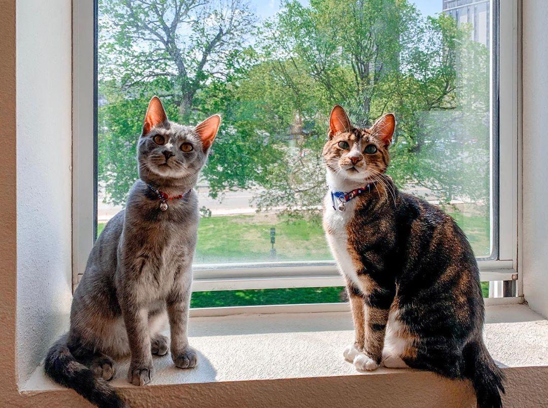 happy caturday • • • catsofinstagram kittenpics