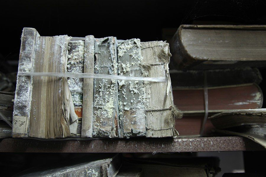 How To Remove Mold From Books Cleaning mold, Book repair