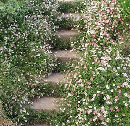 Photo of 68 ideas garden path ideas made easy
