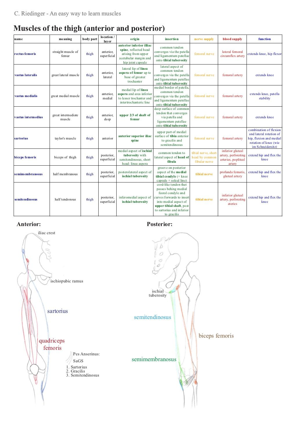 An Easy Way To Learn Muscles Of The Lower Limb By Christiane