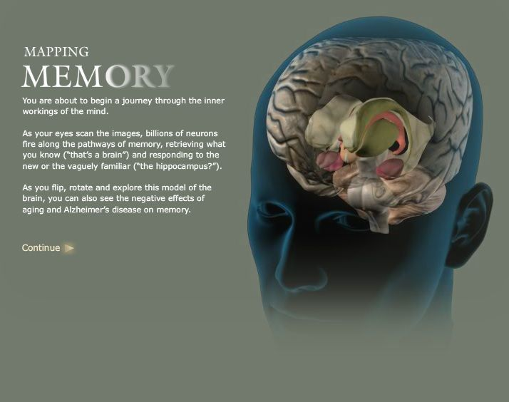 Mapping Memory From National Geographic An Interactive Biology Of