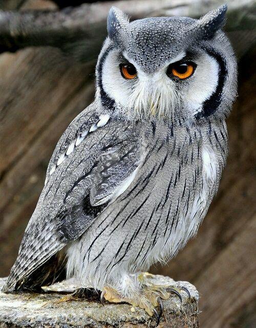 просто животные – Сообщество – Google+   Картинки с совой ...