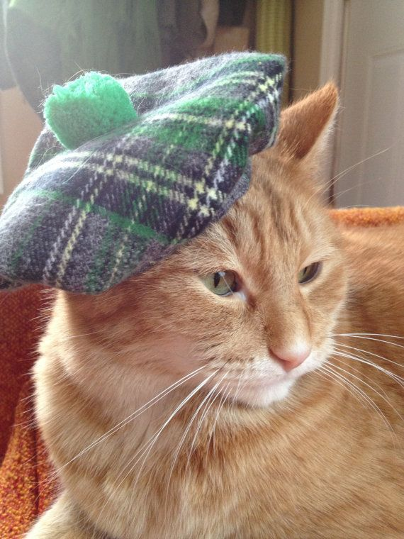 Actually For Lucy S Cousin Cat Hat Irish Tam For St Patrick S Day By Doginafez On Etsy 8 50 Cats Cat Hat Cats With Hats