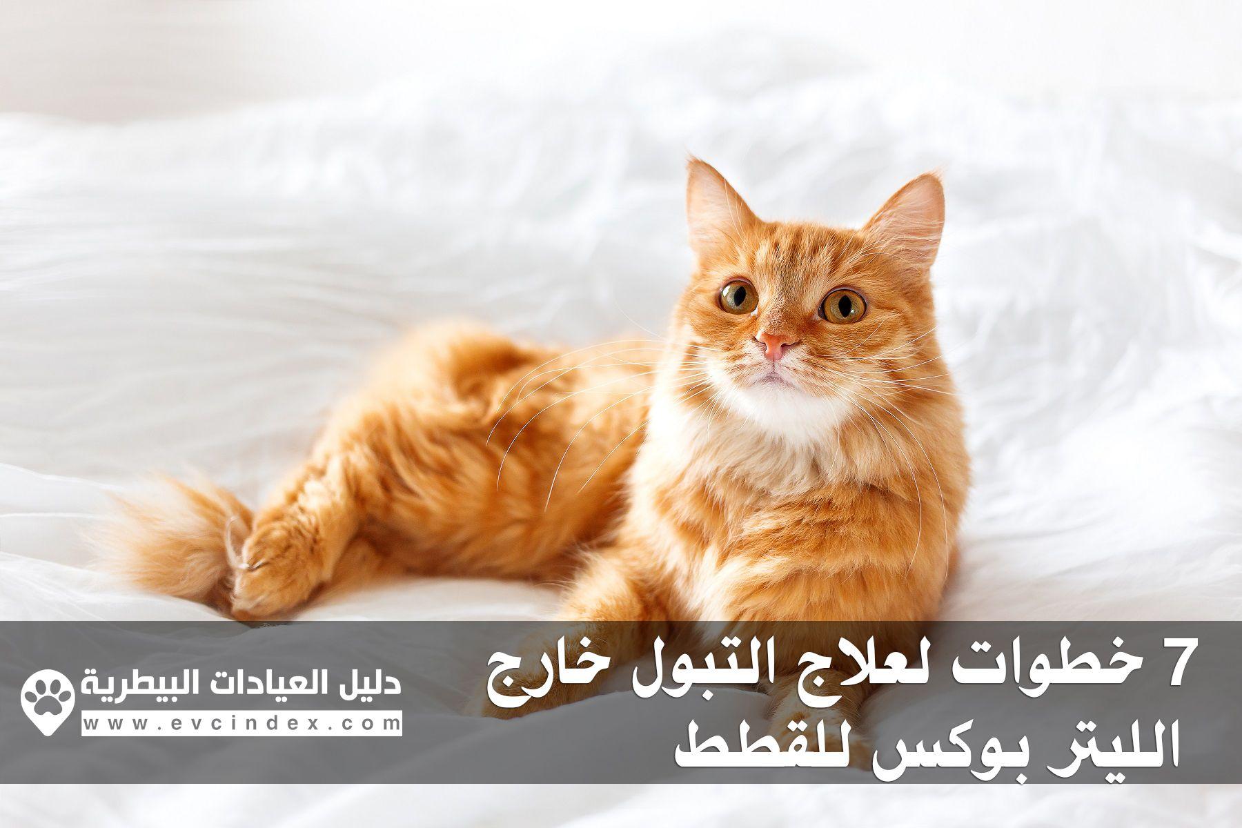 7 خطوات لعلاج التبول خارج الليتر بوكس للقطط Cat pee, Cat