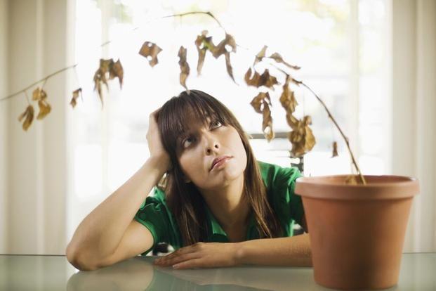 Jesli Bedziemy Zapominac O Podlewaniu Kwiatow Doniczkowych To Niestety Moga One Ulec Przesuszeniu Plants Houseplants Big Plants