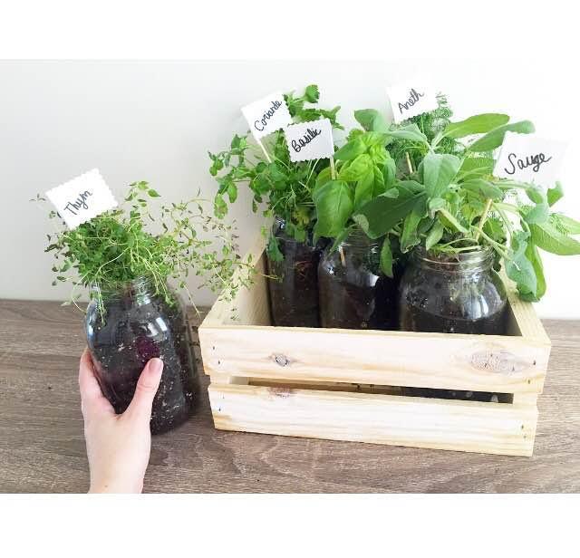 Planter des herbes aromatiques en jardiniere comment - Planter des herbes aromatiques en jardiniere ...
