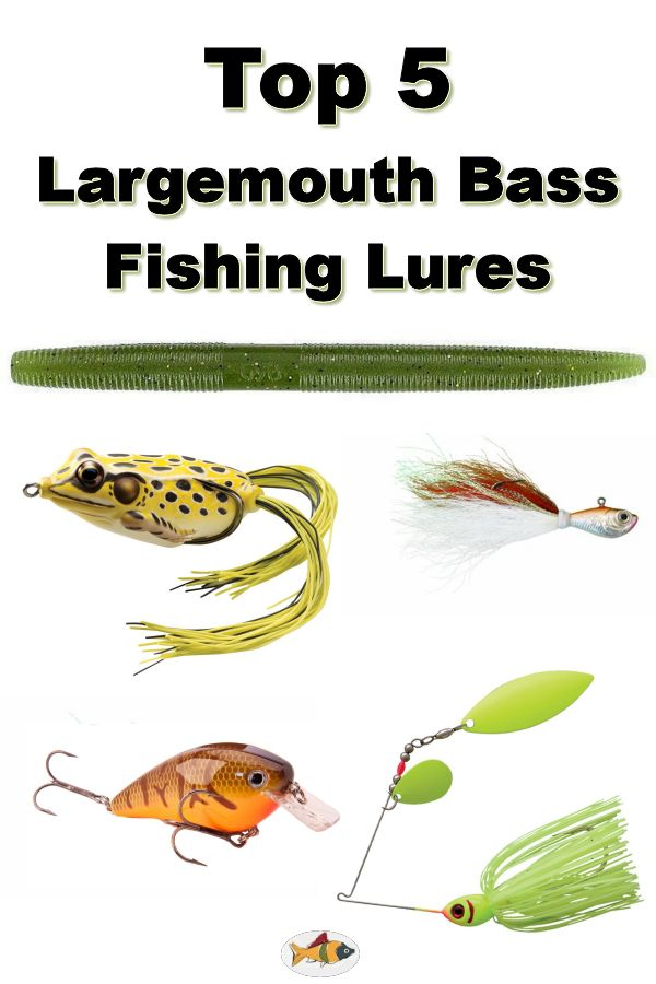 Top 5 largemouth bass fishing lures pinterest bass for Best fishing bait