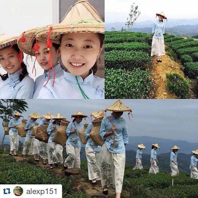 Avez-vous déjà visité une plantation de thé ? #Repost @alexp151 with @repostapp…