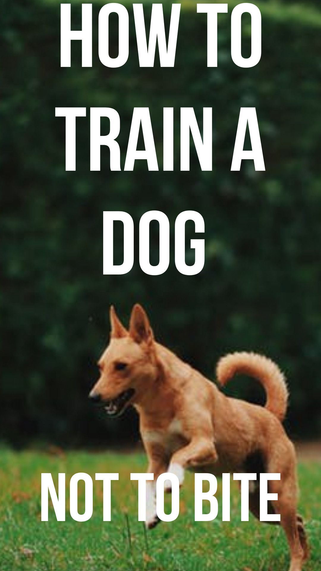 How To Train A Dog Not To Bite Very Cute Dogs Dogs Cute Dog