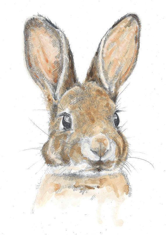 HARE Wildlife Portrait by award winning artist John Silver. Personally signed A4 or A3 size Print. HA004SP