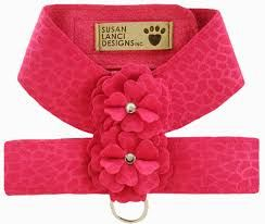 Image result for cute toy dog harnesses